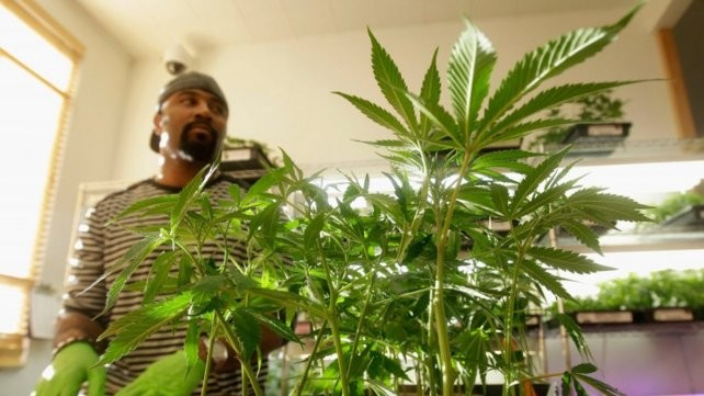 Es legal la marihuana recreativa en California y gran parte de Estados Unidos