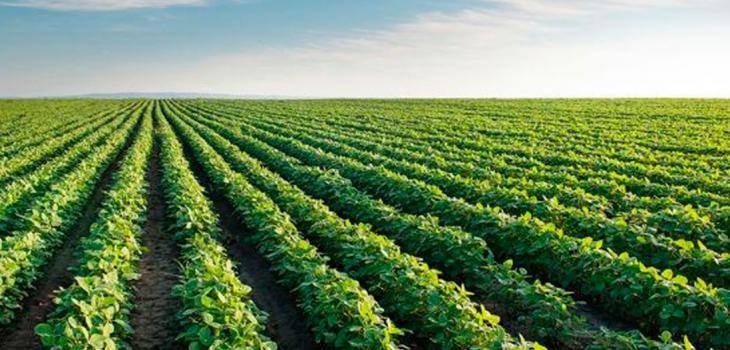La quita de retenciones a la soja tendrá un costo fiscal de $ 20 mil millones