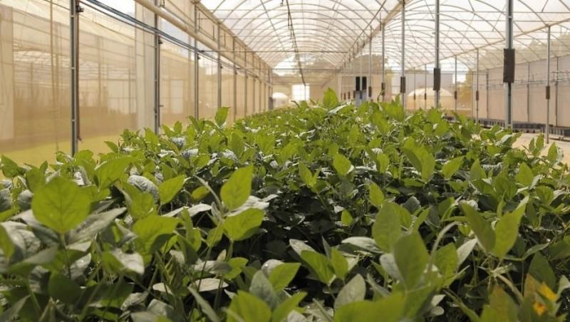 La productividad agrícola ahora depende de la inversión científica
