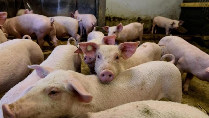 El consumo de carne porcina crece a una tasa del 10% anual en el país