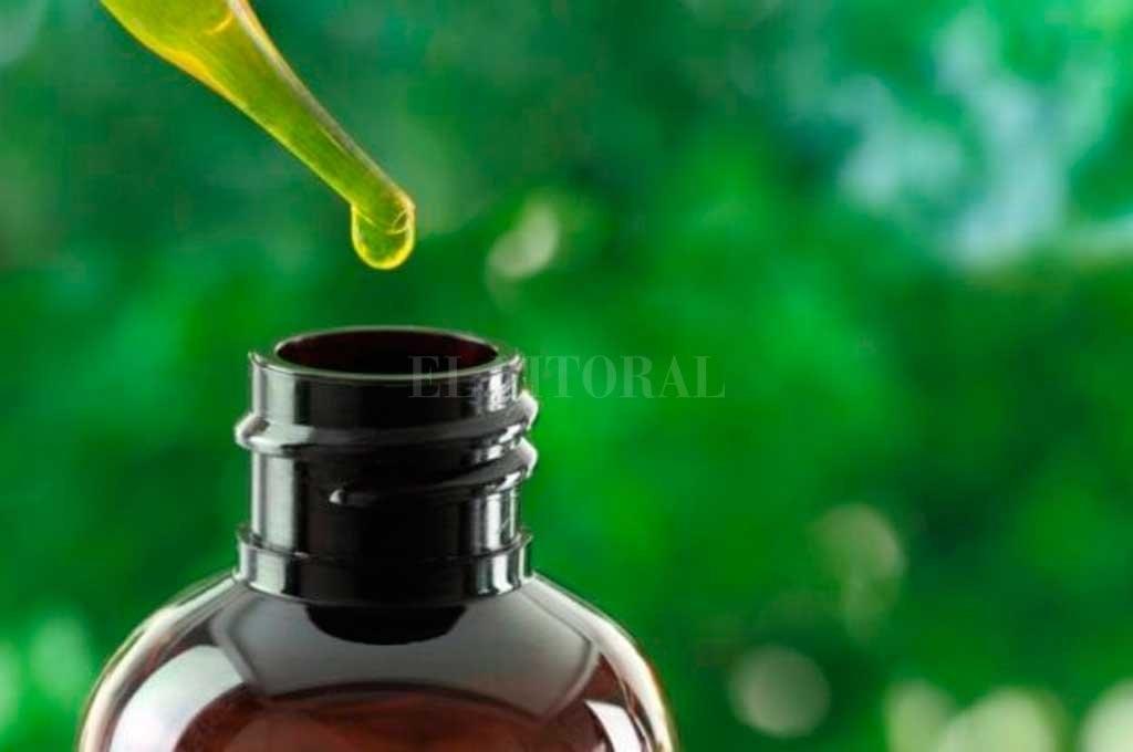 Santa Fe se acerca a la producción de aceite de cannabis