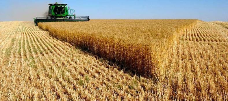 Para la Bolsa rosarina, la cosecha de trigo finalizó con un récord de 19,5 millones de toneladas
