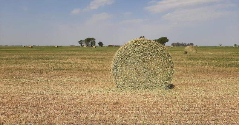 Sequía: el sur de Santa Fe cerró el año con una faltante de más de 400 milímetros