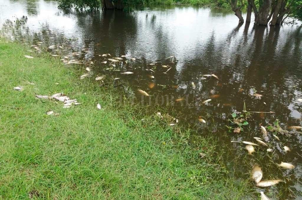 Mortandad de peces: desde el Ministerio de Ambiente apuntan a la falta de oxígeno en el agua