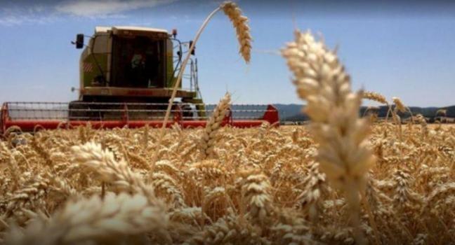 Advierten sobre la falta de trigo por la protesta de transportistas autoconvocados