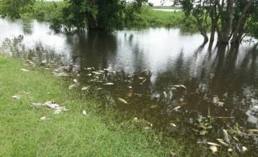 Mortandad de peces: los análisis de agua dieron negativo, inclusive de glifosato