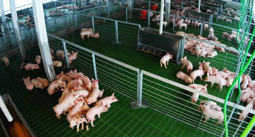 Productores de cerdo le reclaman al Gobierno porque los excluyó de la rebaja de cargas patronales