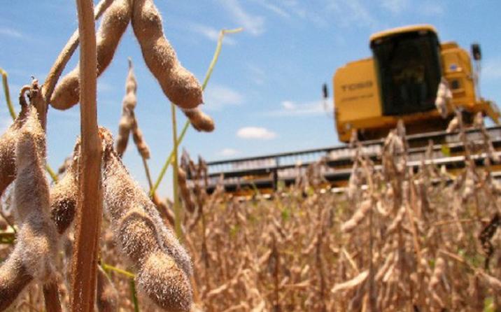 Las lluvias de enero le dieron un empujón a la soja: proyectan una producción de 53 millones de toneladas
