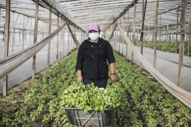 Colonias agroecológicas: una forma de producir alimentos sanos y baratos