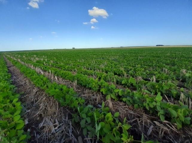 La soja y el maíz pasaron a la ofensiva