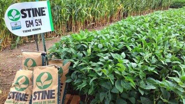 Lanzan un nueva tecnología para soja