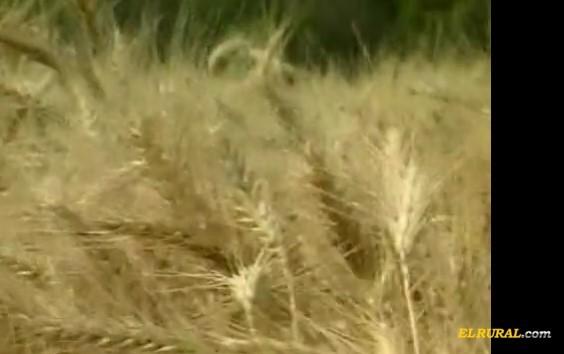 Campaña 2017/2018: Esperan poco cambio en los costos agrícolas