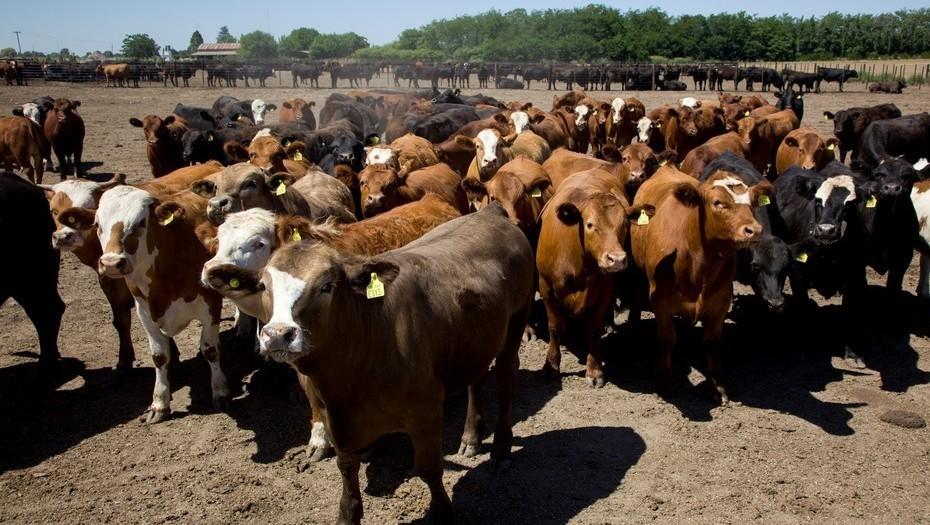 La ganadería gana peso en Expoagro