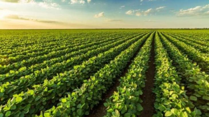La cosecha de soja cobra impulso y se mantiene en 52 millones de toneladas estimadas