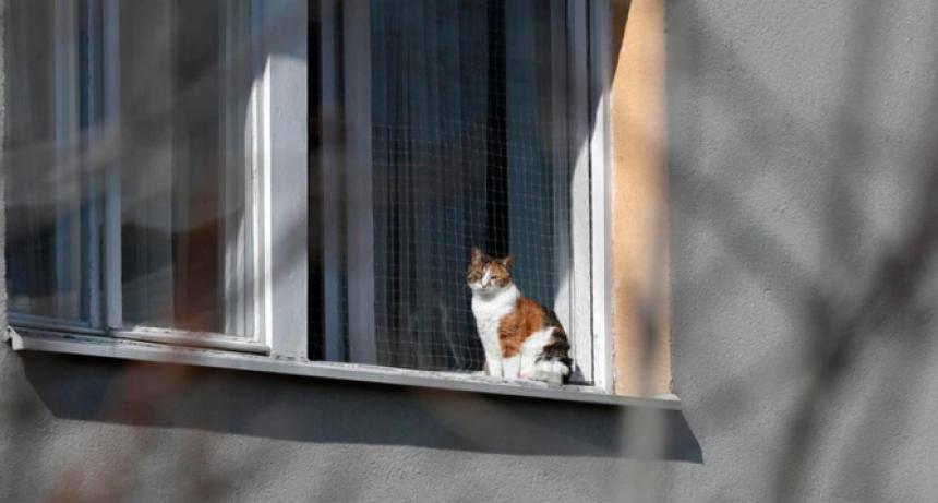 Qué dicen los expertos sobre el gato portador del coronavirus que se encuentra aislado en Bélgica