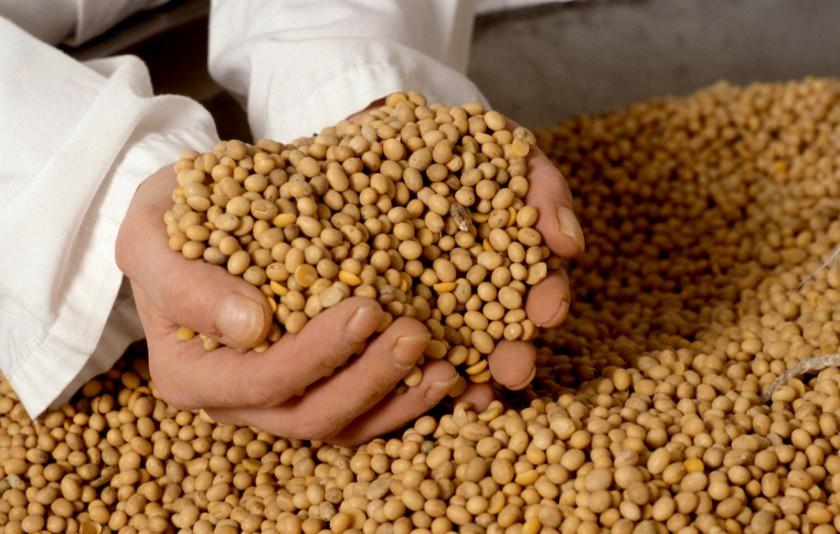 FAA pidió que Defensa de la Competencia se expida sobre una denuncia contra Monsanto
