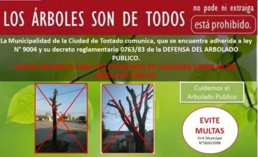LOS ÀRBOLES SON DE TODOS