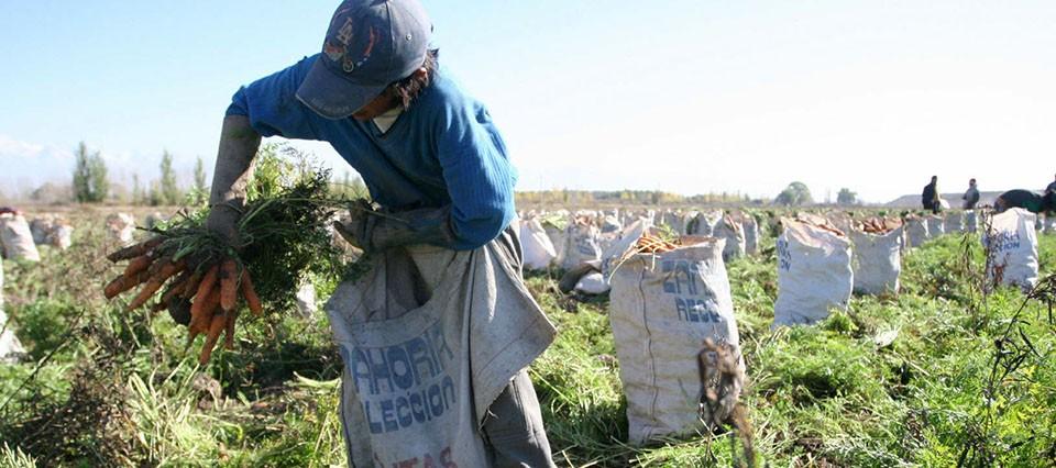 UATRE dio a conocer la nueva escala salarial para trabajadores agrarios con el 22% de aumento