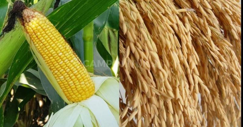 El buen tiempo acompañó la cosecha de los cultivos