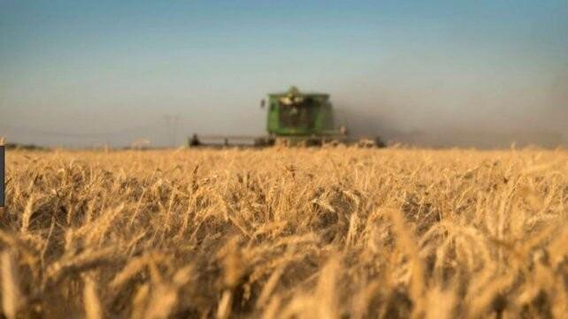 El agua y los precios arman el combo perfecto para el trigo