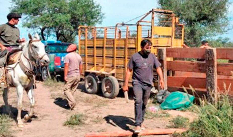 Ordenan detener a 5 sujetos por robo de vacas en Santa Fe