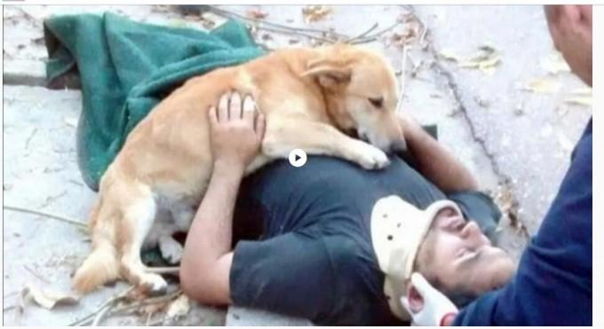 La conmovedora historia de Tony, el perro que