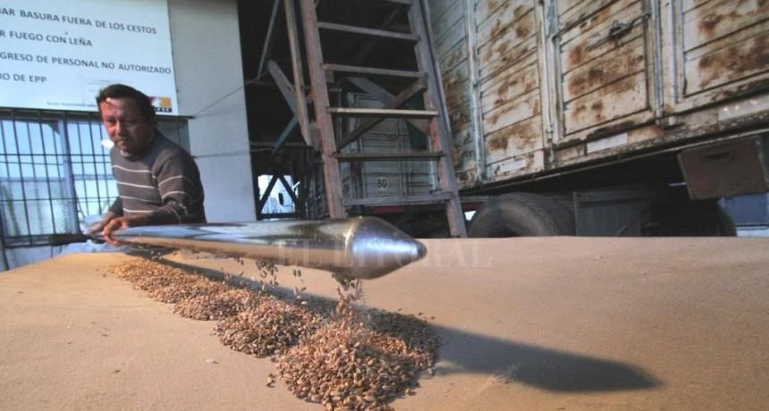 El precio del trigo vuela en el mercado argentino