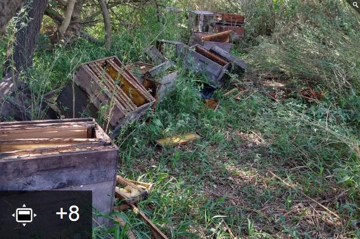 Tierra de nadie: saqueadores de miel ponen en jaque a los apicultores de San Javier