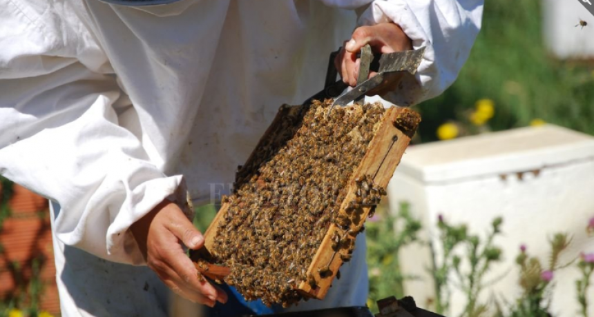 Semana de la miel, un tiempo para acercarse a la apicultura