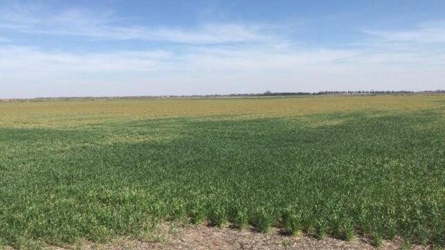 La Niña se disipa y mejoran las perspectivas para los cultivos de invierno