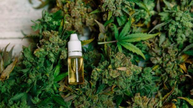 Aseguran que la producción estatal de aceite de cannabis en Santa Fe comenzará en los próximos meses