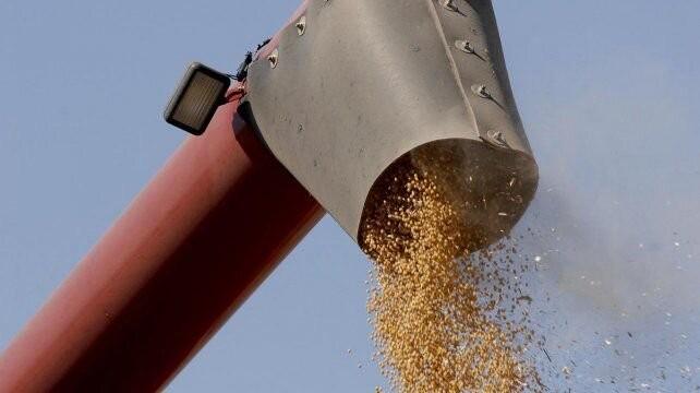 La soja, a un paso de superar los u$s 600