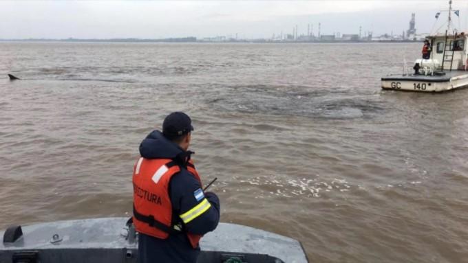 Murió la ballena encallada en el Río de la Plata, frente a Dock Sud