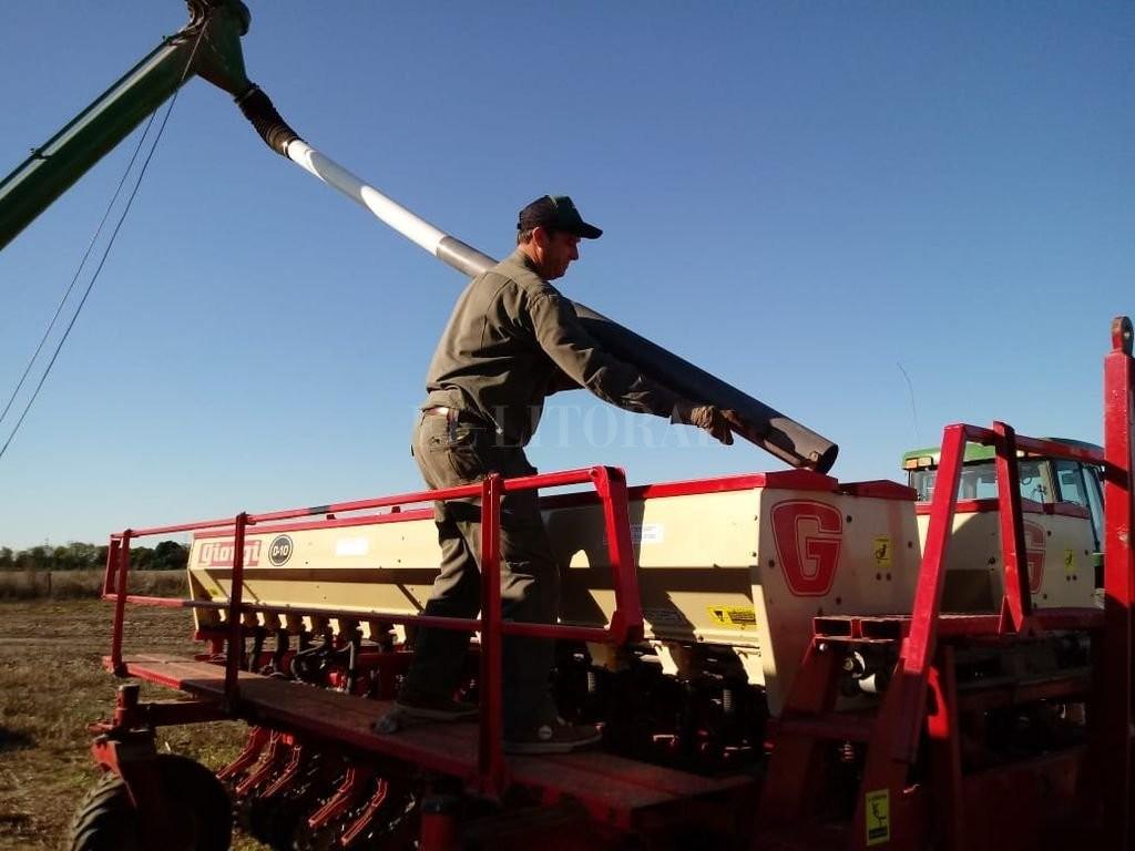 Se apostó a una campaña con mayor aplicación de tecnología y a todo el potencial del trigo