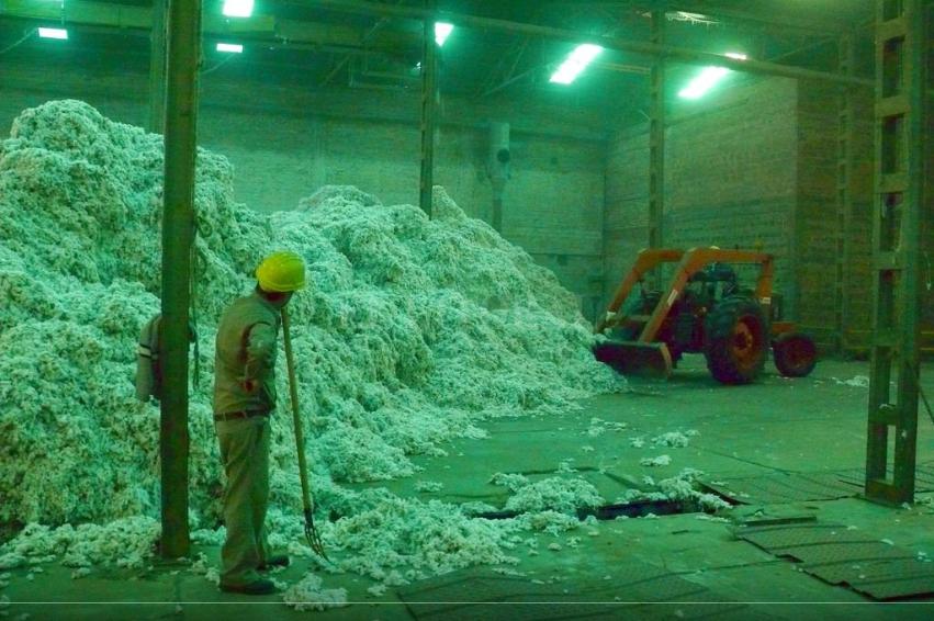 Incertidumbre en el eslabón algodonero del Grupo Vicentín