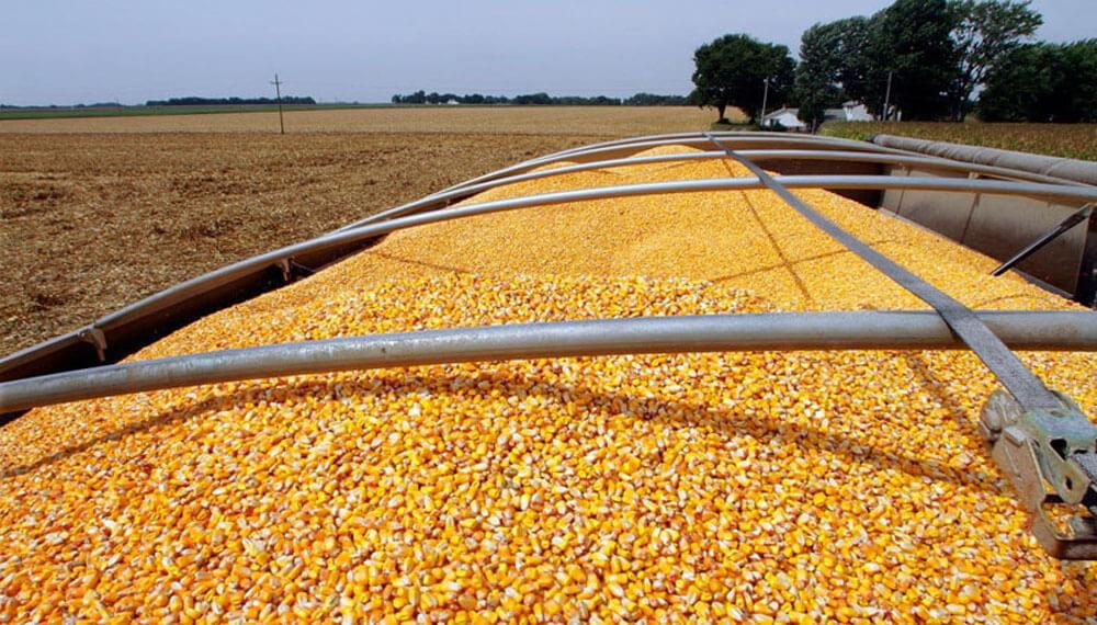 Aumenta 20% la tarifa de referencia del transporte de granos