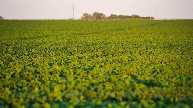 El precio de la soja cae en Chicago a su nivel más bajo en dos meses