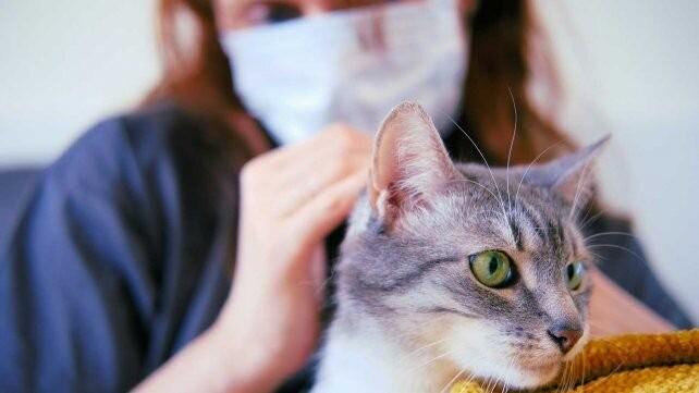 Los gatos son más propensos que los perros a contagiarse de coronavirus