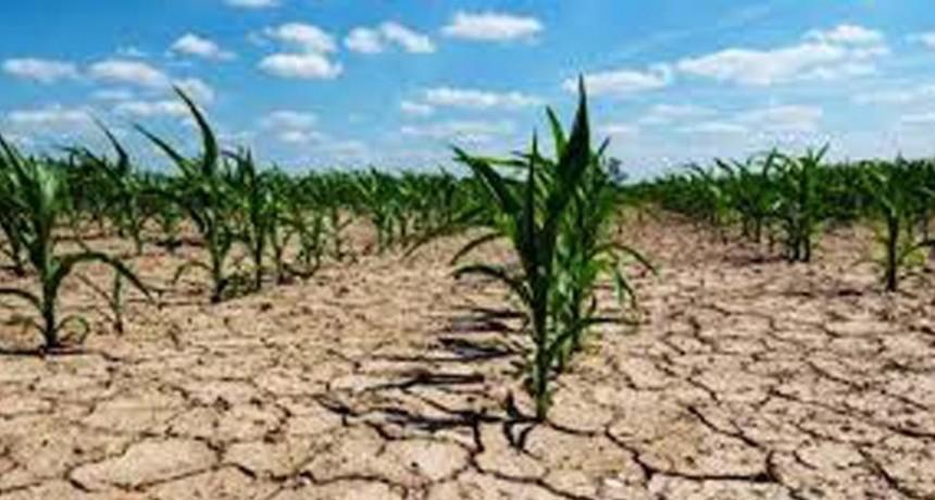 La sequía en la provincia generó pérdidas en la actividad agropecuaria a productores