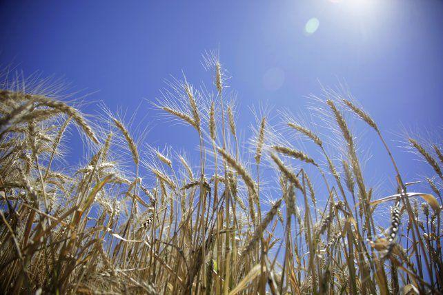 Clima y precios condicionan la campaña agrícola
