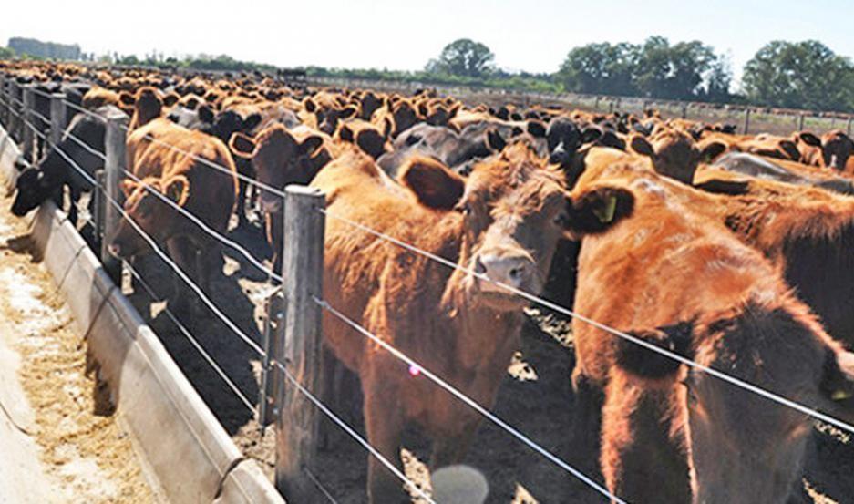 Denuncian audaz robo de ganado por un valor de $ 9.000.000 en feed lot del departamento Robles