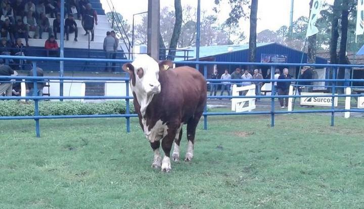 """La Sociedad Rural de Reconquista invita al """"Remate anual de reproductores"""""""