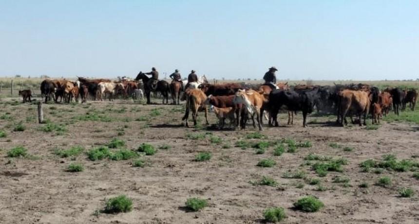 Secuestraron 50 vacas robadas en el norte santafesino