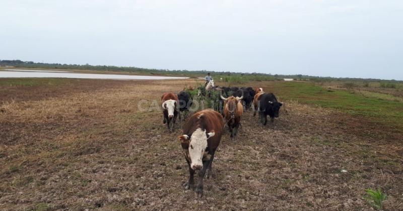 Así impacta la histórica bajante del Paraná a productores santafesinos