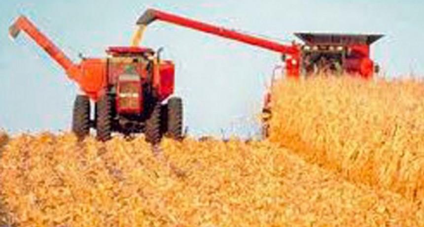 Nuevo cepo para exportar maíz y el campo espera