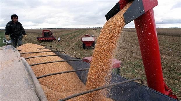 Creación de empleo en el agro