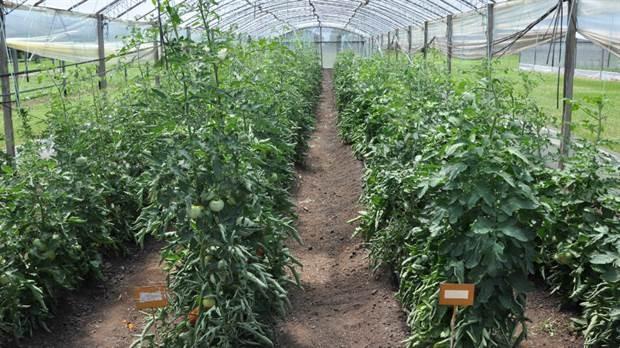La agenda del agro