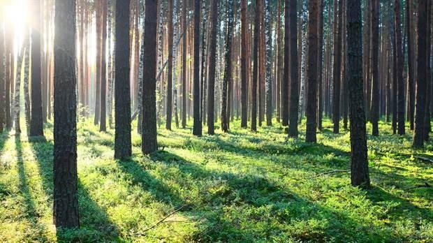 Industria forestal: una cadena que quiere recuperar el tiempo perdido