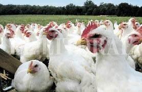 Vaticinan un drástico aumento de la demanda de proteínas animales