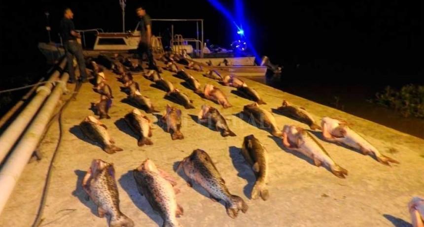 1000 kilos de surubí incautados en Reconquista
